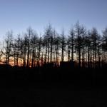 日の出が透ける防風林