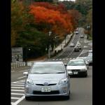 仙台市内の街路樹が一斉に色づく