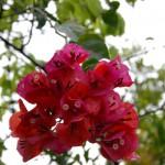 緑も花も雨で輝きを増す