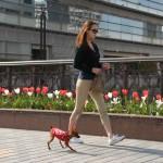 春の陽気につられて散歩