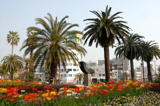 フェニックス並木と花々が美しい宮崎市橘通り