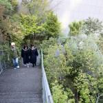 階段を昇ると徐々に緑が深くなる