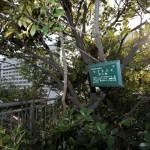 主要樹木にはインフォメーションボードが掲げてある