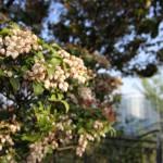 花には昆虫や鳥が集まる