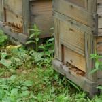 いっせいに巣箱から飛び出す蜜蜂