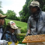 巣箱の蜂がちょっと怖い?