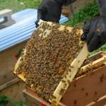 蜜蜂がびっしり