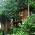 塩江の深い森に佇むツリーハウス
