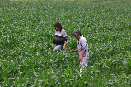 とうもろこし畑を見つめる宮木さん夫妻