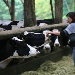 穏やかな表情を見せる牛たち