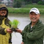 この苗から米が穫れるんですね