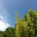 梅雨明けを予感させる夏空