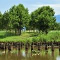潟の島に生える樹木