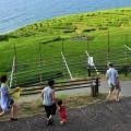 千枚田の中へ入って見学できる