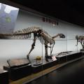 「フクイサウルス・テトリエンシス」の化石複製