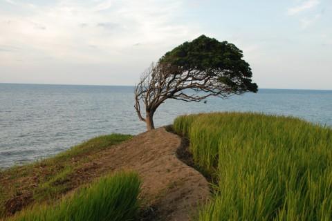 強風に耐えながら力強く生きる木