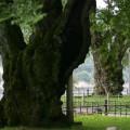 ごつごつとした樹肌に歳月を感じる