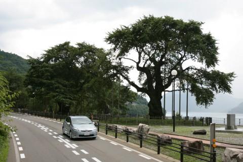 荘川桜とプリウスPHV