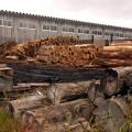 伐採された杉が積み上げられた製材所