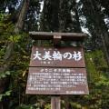 山道入口に立つ「大美輪の杉」案内板