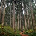 巨木群に囲まれた散策路を往く