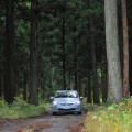 若い杉林に囲まれた林道を進むプリウスPHV
