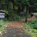 「大美輪の大杉」の森に到着