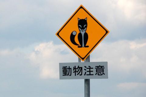 頻繁に見かけるキタキツネの注意標識
