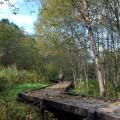 湿地には木道が整備されている