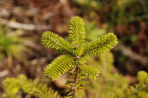 下川町「Gazooの森」に植えられたカラマツの苗たちがゆっくり森になる