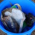 ゴミもしっかり回収しました