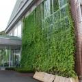 光市民ホールの見事なグリーンカーテン