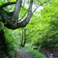 深い森の入口