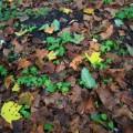すでに落葉が始まっていた