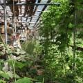 排水利用の屋内菜園