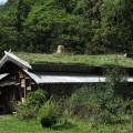 屋根が緑化されている