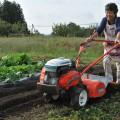 綿花以外にも多種多様な野菜を育てている