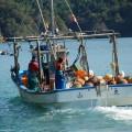 牡蠣やホタテを積んだOH!ガッツ!の船