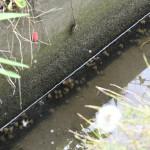 水の生き物であふれる水路