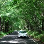 美しい緑のトンネルを抜け奥那須へ