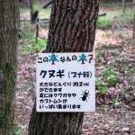 樹木の説明ボードも充実している