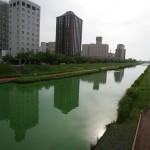 アオコの大量発生で鮮やかな緑色の桜川