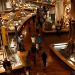 中生代からの恐竜展示も人気だ