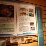 利根川水系の生態系展示