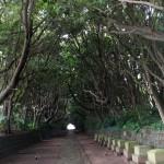 椿並木がすばらしい酒列磯神社の杜