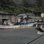 宇田浦漁港に停泊する「第一尾無丸」