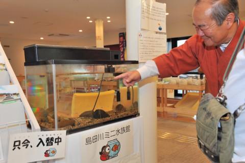 島田川ミニ水族館