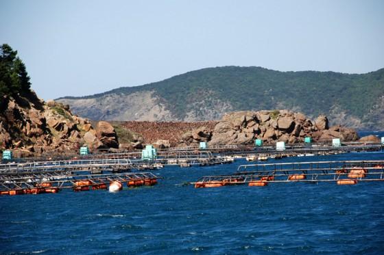 真珠養殖の護岸も石垣で出来ている