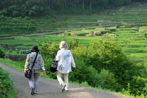 陽が差してきた棚田には見物に訪れる人がチラホラ。