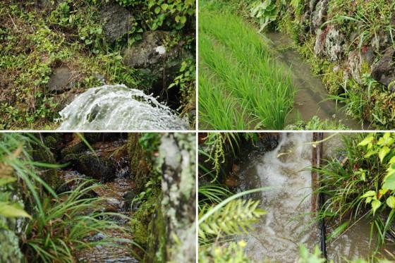 四谷千枚田を流れる水路(2)